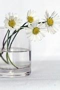 flowers-646637__180